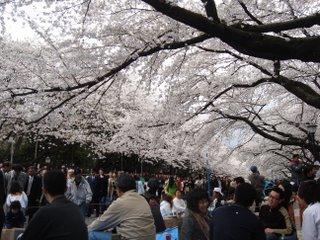 Hanami a Ueno Koen