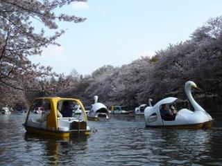 Le pedalo, cygne ou auto, pour decouvrir le sakura...